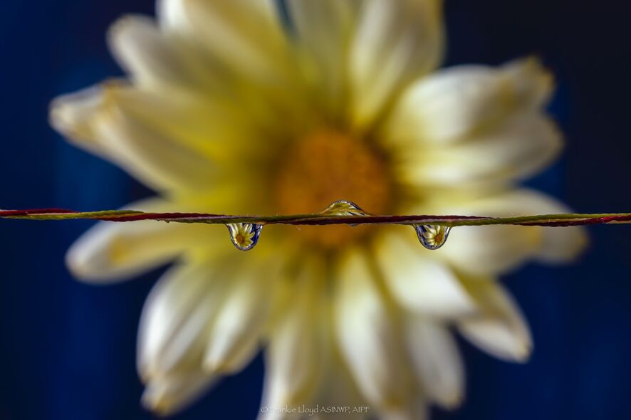 Three-drops-over-yellow-flower