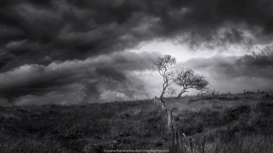 Tree-and-Sky-Coynes-BnW-16x9