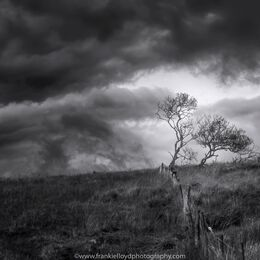Tree-and-Sky-Coynes-BnW-16x9
