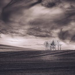 Trees-with-swirly-clouds-BnW