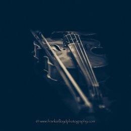 Violin-