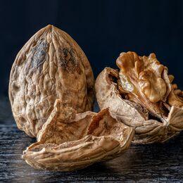 Walnut-