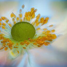 White-daisy-yellow-centre-53shot