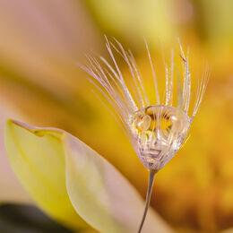 Yellow-flower-drop-portrait