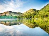 Swans On Ullswater