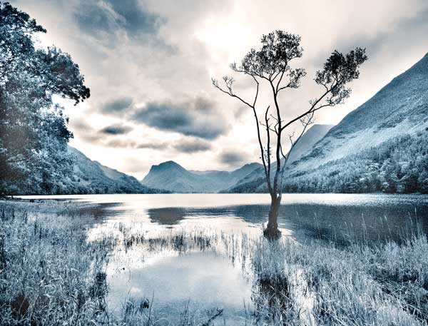 Lone Tree On Buttermere