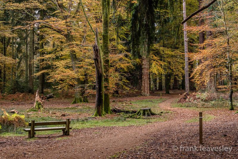 Autumn Brock Hill