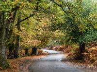 Autumnal Drive