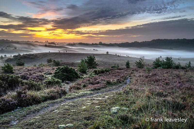Dawn Forest Walk