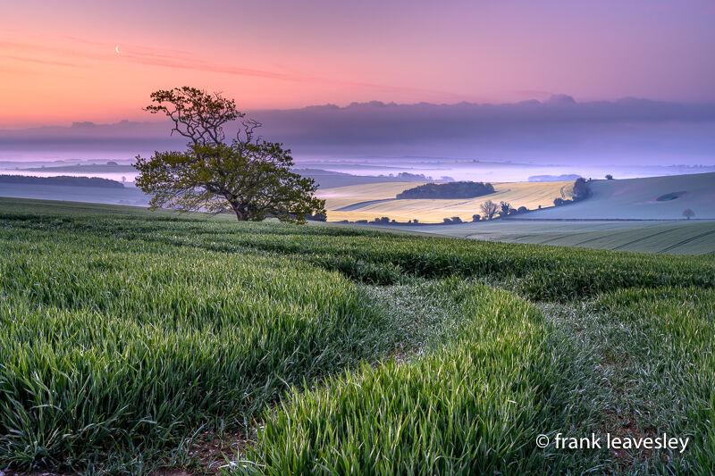 Dorset Dawn