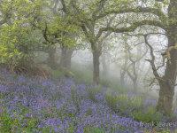 Dorset Misty Blue