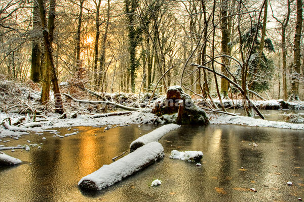 Frozen in the Forest