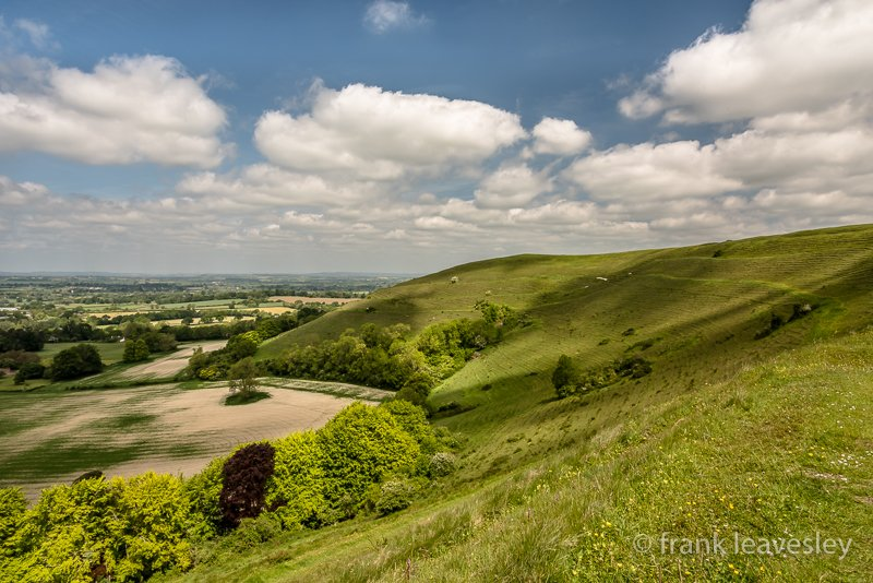 Hambledon Hill In May