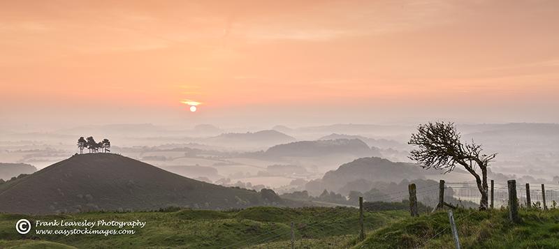 Misty Dawn Dorset