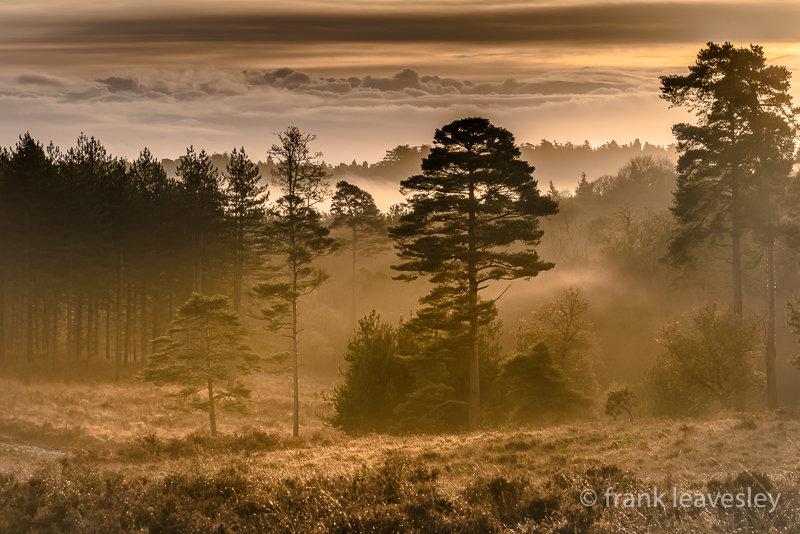 November Dawn