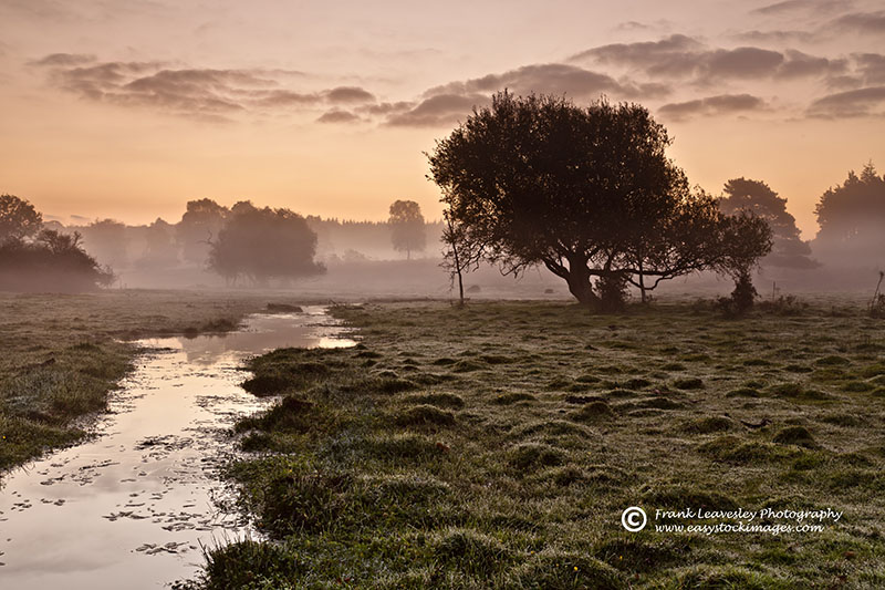 October Mist New Forest