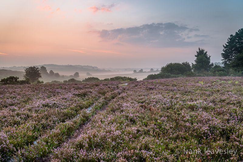 Pastel Forest Dawn