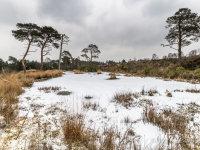 Snow Christchurch Common