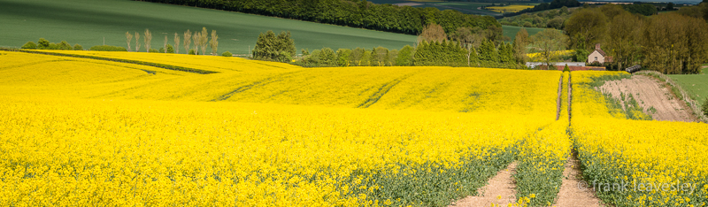 Wiltshire Gold