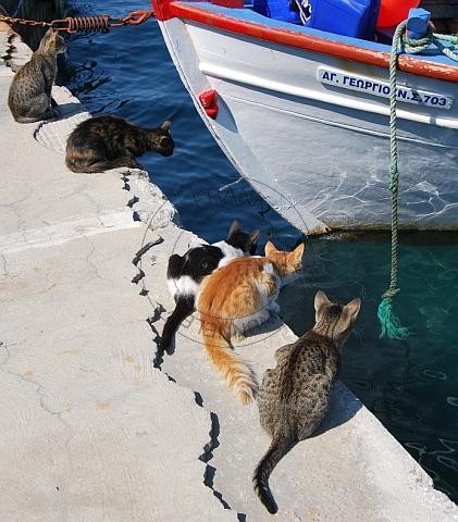 hungry cats, samos