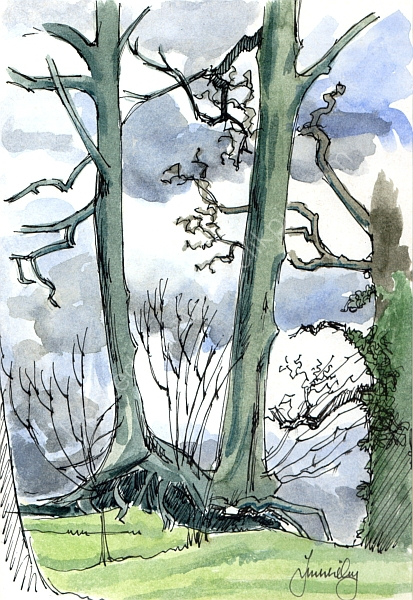 in the Savernake Forest, Wiltshire