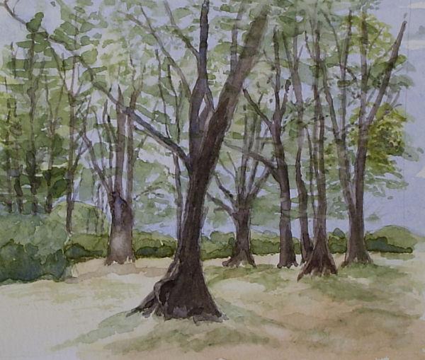 Near Burley New Forest