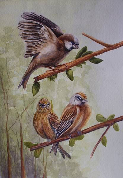 Social Life of Birds