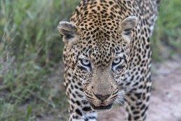 Kruger NP - Sabi Sands