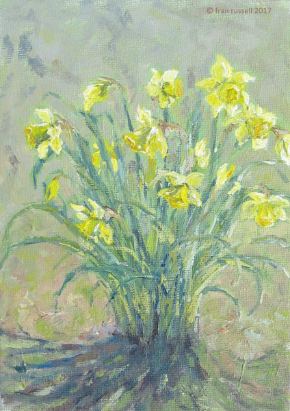 Daffodils in Spring Sunshine
