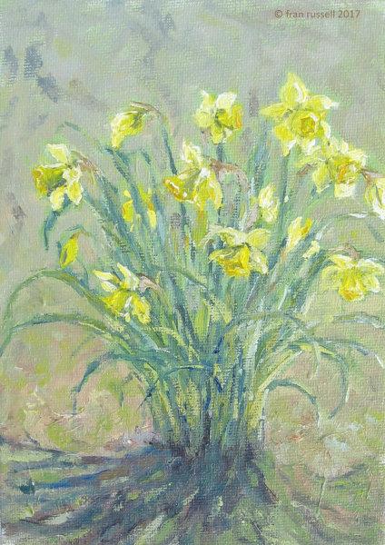 Daffodils in Spring Sunshine