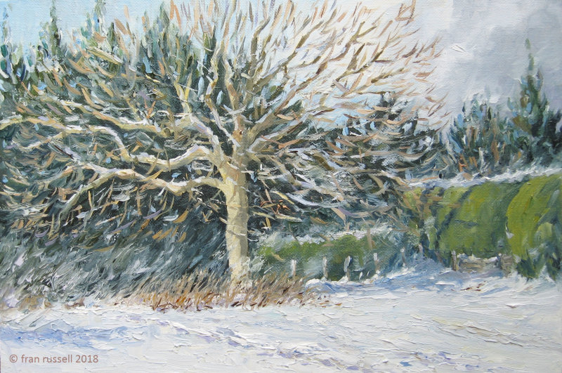 Oak & Hedge - late February Snow