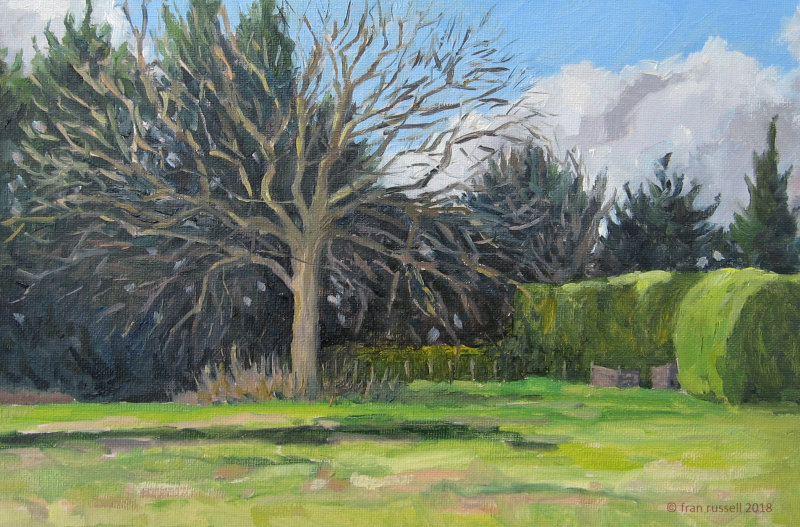Oak and hedge in January sun