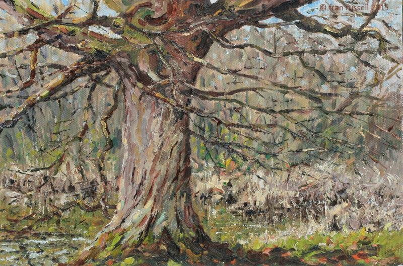 Winter oak, Sissinghurst Lake