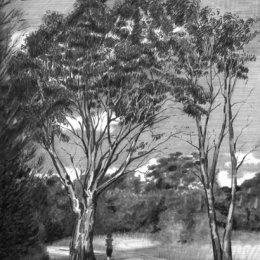 Gum Tree, Jells Park, Melbourne