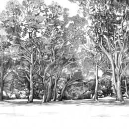 GumTrees on the Yarra