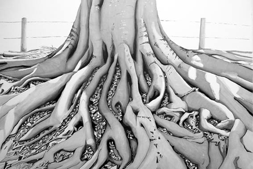 Roots: Gum tree, Yarra Bend Park, Melbourne, Victoria