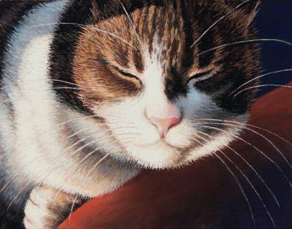 NEW! 'Catnap'