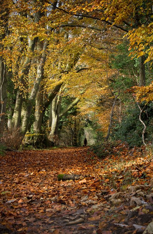 Autumn Walk in the Chilterns