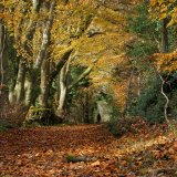 Autumn Walk in the Chilterns