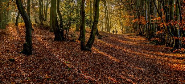 Autumn Walk, Ampthill