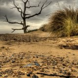 Covehithe Beach