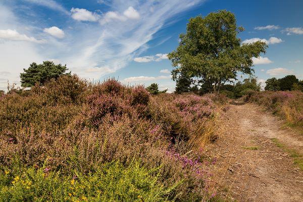 On the Heath