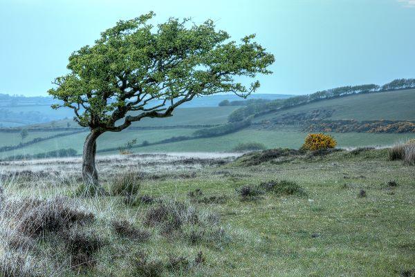 Exmoor Tree