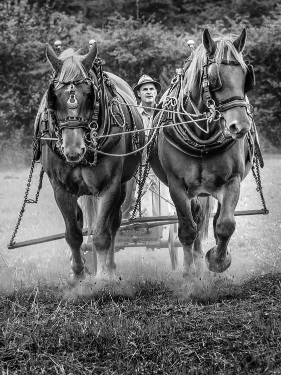 Behind the Plough