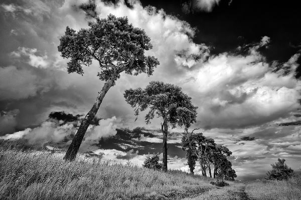 The Brecks, Infrared
