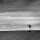 Lone tree in the field