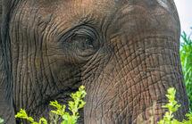 Elephant Umfolozi SA 1048