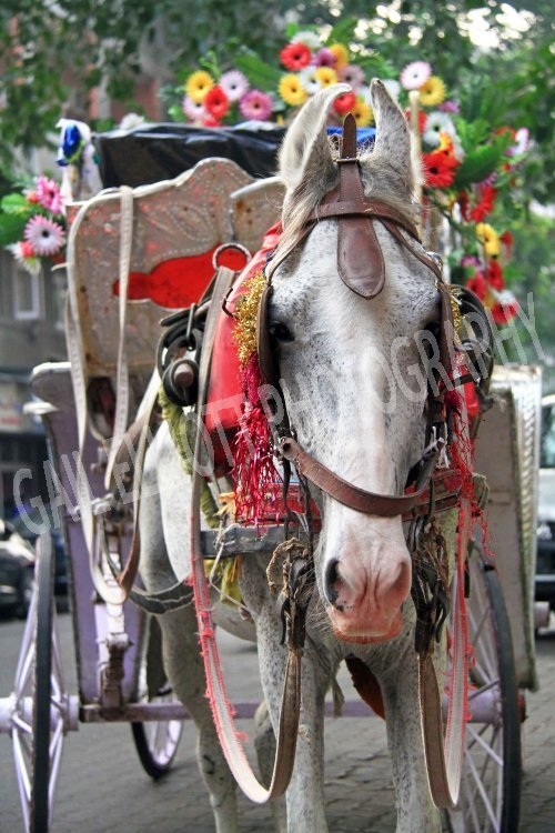 Decorated Indian Horse