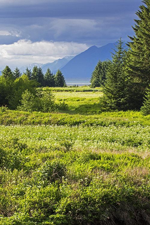 Spasski River Valley, Alaska