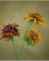 A Trio of Autumn Flowers
